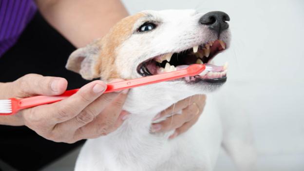 dog dental hygiene tips from tustana animal hospital in tustin california
